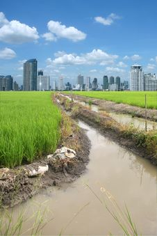 Free Rice Field Buildings Royalty Free Stock Images - 20882699