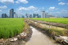 Free Rice Field Buildings Stock Photo - 20882720