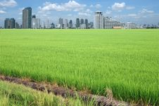 Free Rice Field Buildings Stock Images - 20882734