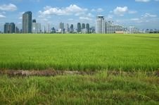 Free Rice Field Buildings Royalty Free Stock Photography - 20882747
