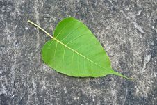 Free Alone Leaf On Concrete Floor Royalty Free Stock Image - 20883786