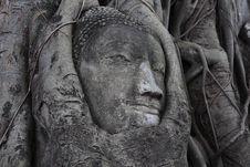 Free Stone Buddha Stock Image - 20883811