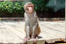 Free Monkey Stock Photo - 20885930