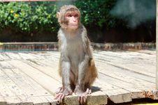 Free Monkey Stock Photo - 20885930