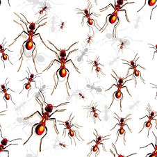 Free Red Ants Stock Photos - 20886313