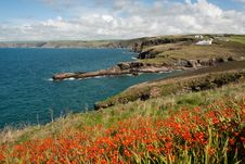 Free Landscape In Port Isaac Stock Images - 20887914