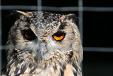 Free Owl Royalty Free Stock Images - 20887979