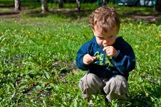 Free Cute Baby Blowing On A Dandelion Royalty Free Stock Photo - 20889035