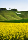 Free Cherhill White Horse, England Royalty Free Stock Photography - 20890597