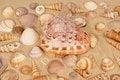 Free Seashells On The Sand Royalty Free Stock Photography - 20895357