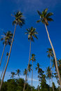 Free Coconut Trees Royalty Free Stock Photography - 20898107