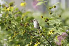 Free Bird On Bush Branch Stock Images - 20890064
