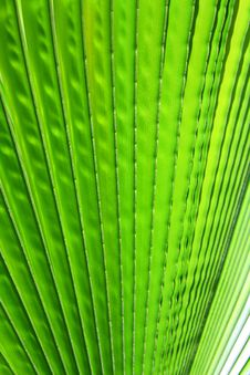 Free Image Of Green Palm Leaf Closeup Stock Photo - 20890080