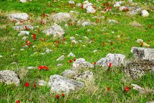 Free Meadow With Stones And Red Poppy Flowers Stock Images - 20890394