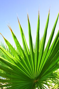 Free Green Palm Leaf Royalty Free Stock Photo - 20890535