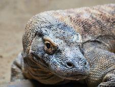 Free Komodo Dragon Stock Photography - 20891442