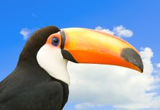 Free Toucan With Sky In Background. Stock Photos - 20892053