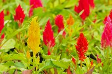Colorful Of Flower In The Garden Royalty Free Stock Photography