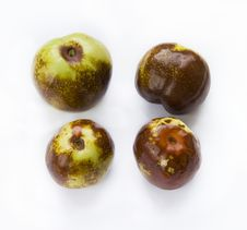 Free Jujube Royalty Free Stock Photo - 20892955