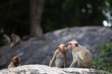 Free Little Monkey Kiss Mom Stock Photos - 20893223