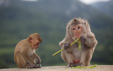 Free Little Monkey And Mom Sitting On Floor Royalty Free Stock Photo - 20893235