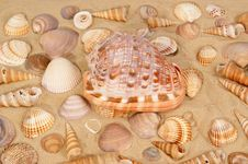 Free Seashells On The Sand Royalty Free Stock Photography - 20895357