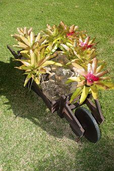 Free Wheelbarrow And Bromelias Royalty Free Stock Photo - 20896935