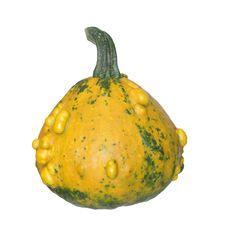 Yellow Pumpkin Royalty Free Stock Photography