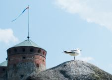 Free Seagull Standing On A Rock Royalty Free Stock Photos - 20898698