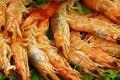 Free Many Shrimp Stock Photo - 2091620