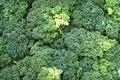 Free Unusual Salad Stock Photo - 2094800