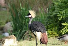 Free Colorful Crane Royalty Free Stock Photography - 2094327