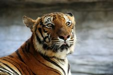 Free Tiger Portrait Stock Photography - 2095522