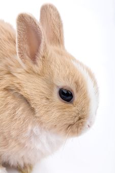 Free Cute Brown-white Bunny, Isolat Royalty Free Stock Photo - 2096825