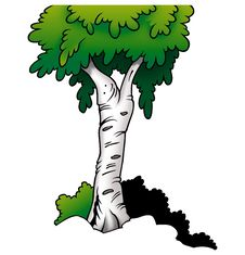 Free Tree - Birch Royalty Free Stock Photo - 2097935