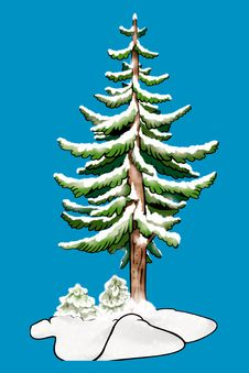 Free Tree - Coniferous Royalty Free Stock Images - 2097959