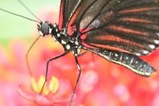 Free Butterfly Stock Photos - 2099053