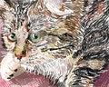 Free Pussycat Royalty Free Stock Photos - 20901888