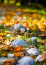 Free Autumn Stones Royalty Free Stock Photography - 20907487
