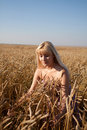 Free The Beautiful Girl In The Field With Wheat Royalty Free Stock Image - 20908706
