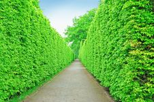 Free Tree Wall Stock Photo - 20901260