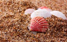 Seashells Over Sea Sand Stock Photos