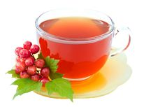 Free Cup Of Tea With Viburnum Royalty Free Stock Photo - 20901905