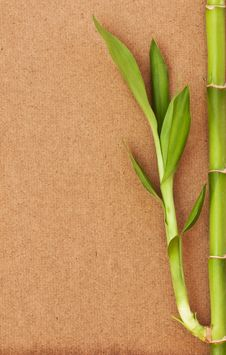 Free Bamboo Tree Stock Images - 20901994