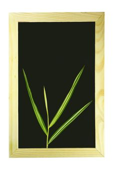 Free Bamboo Leaf Royalty Free Stock Images - 20902679