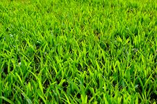 Free Grass Field Background Royalty Free Stock Image - 20904416