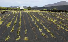 Free Agriculture On Lanzarote Stock Image - 20906681
