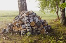Birches Firewood In The Morning Stock Photos
