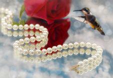 Free Hummingbird And Elegant Pearls Stock Photo - 20907790