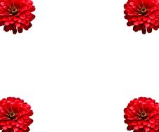 Red Flower Isolate Royalty Free Stock Image